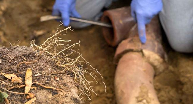 Sewer line cleaning repair and replacement